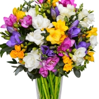 Freesia Rush