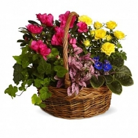 Colorful Basket